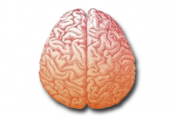 Otak Kiri dan Otak Kanan, Mana Yang Lebih Penting?