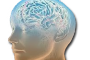 Jangan Biarkan Otak Mati Gara-gara Kehabisan Oksigen